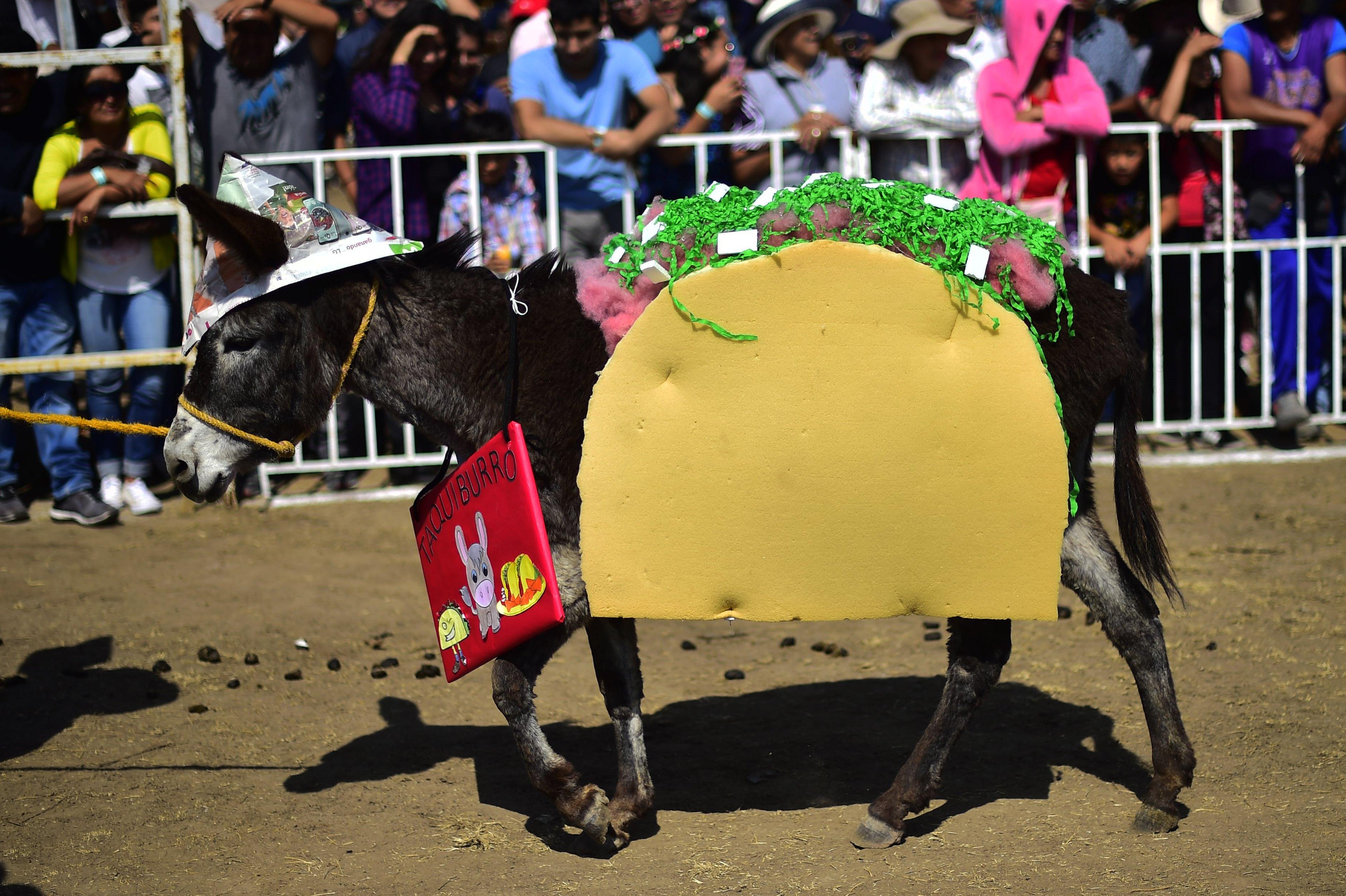 حمار مزين في المهرجان