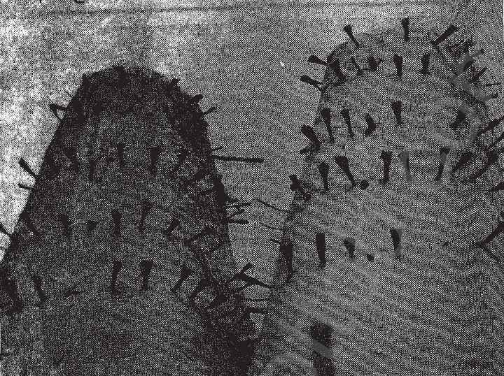 """حادثة دنشواى الخواجة قتل المرة وحرق الجرن"""".. سر الصيحة الأولى التى اشعلت أحداث دنشواى 203159-ابراج-الحمام-فى-دنشواى"""