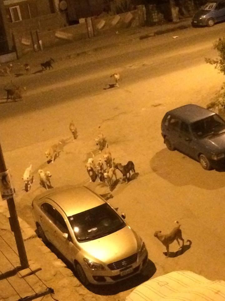 جانب من تجمعات الكلاب