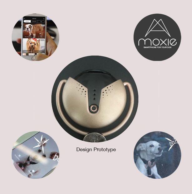 جهاز الكلاب Moxie