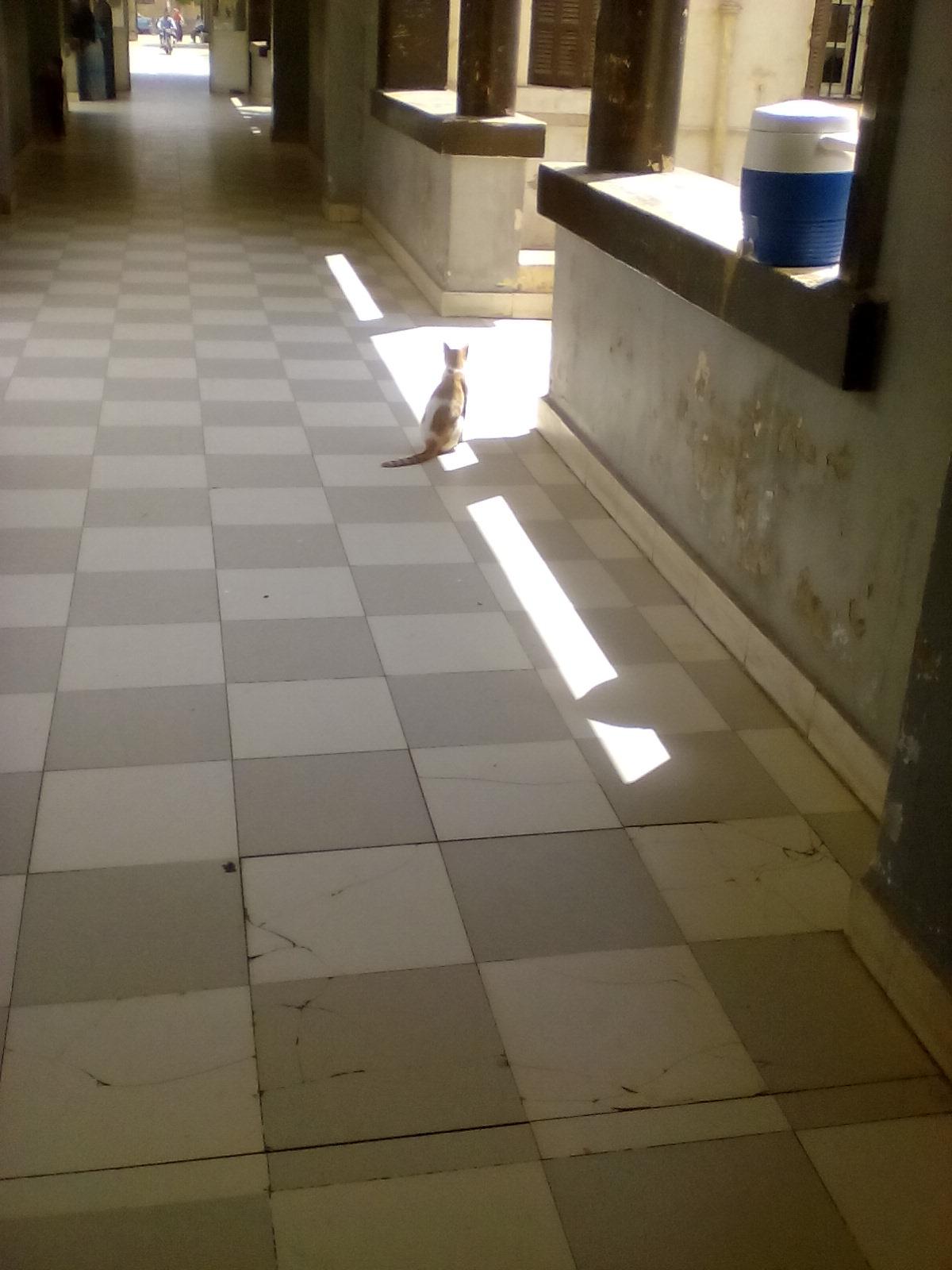 القطط تحاصر المرضى  (2)