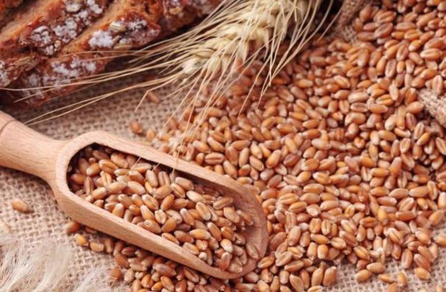 فطر الارجوت يصيب القمح والشعير