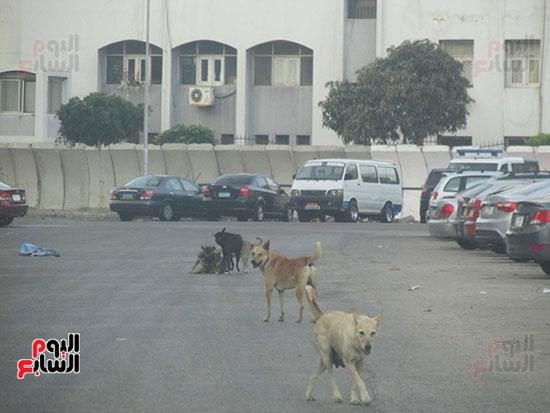 الكلاب تتجول وتهدد المارة