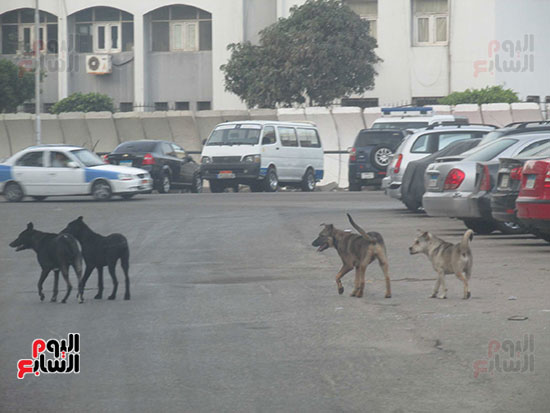 بمحيط قسم شرطة بورفؤاد ثان الكلاب تهدد المارة