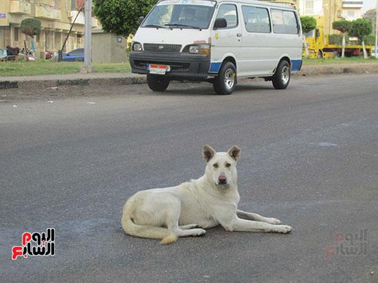 وآخر يجلس وسط الطريق العام