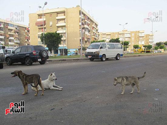 قط يهاجم كلب ضال بالطريق العام