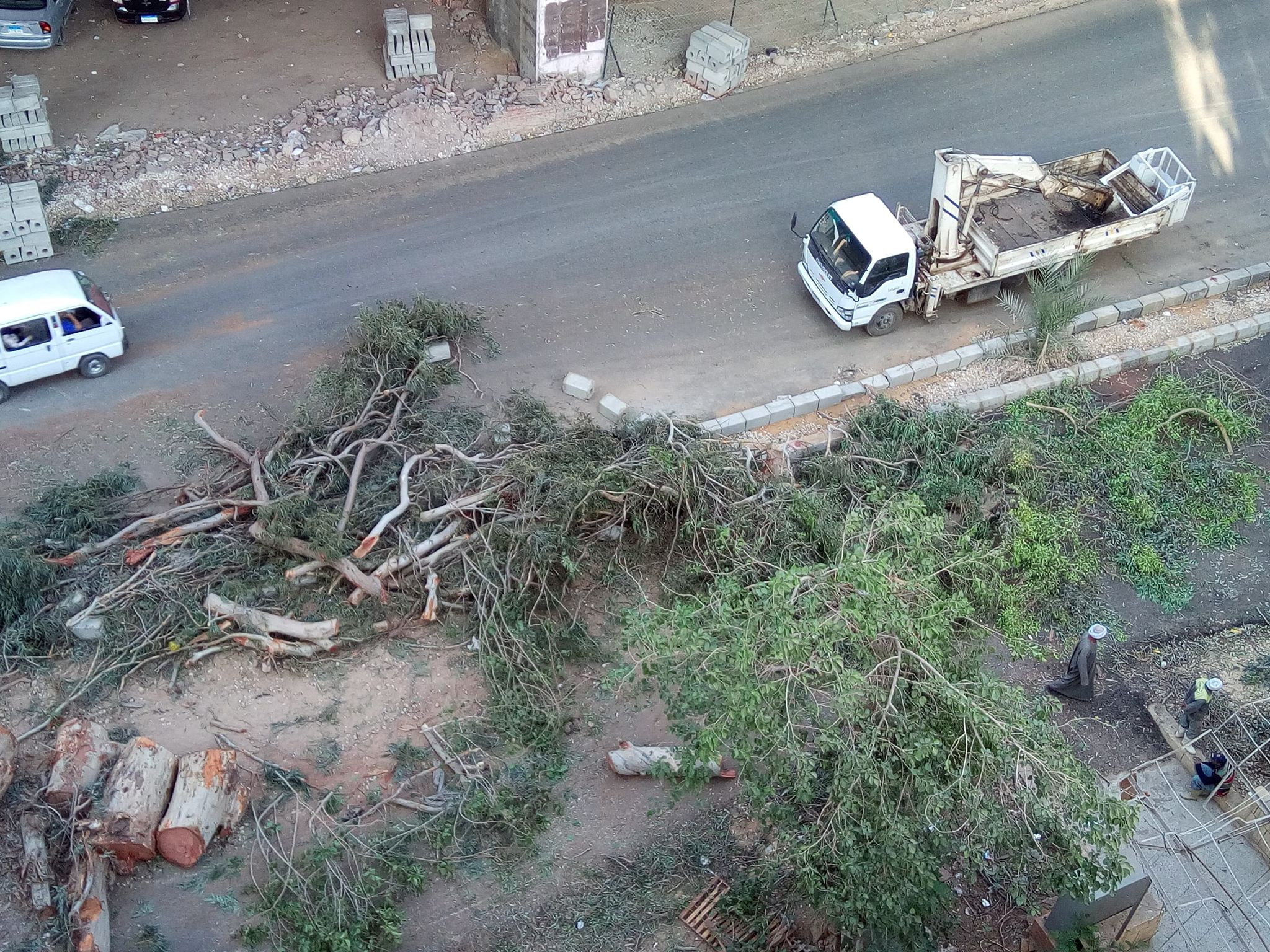 مذبحة أشجار فى شارع المريوطية