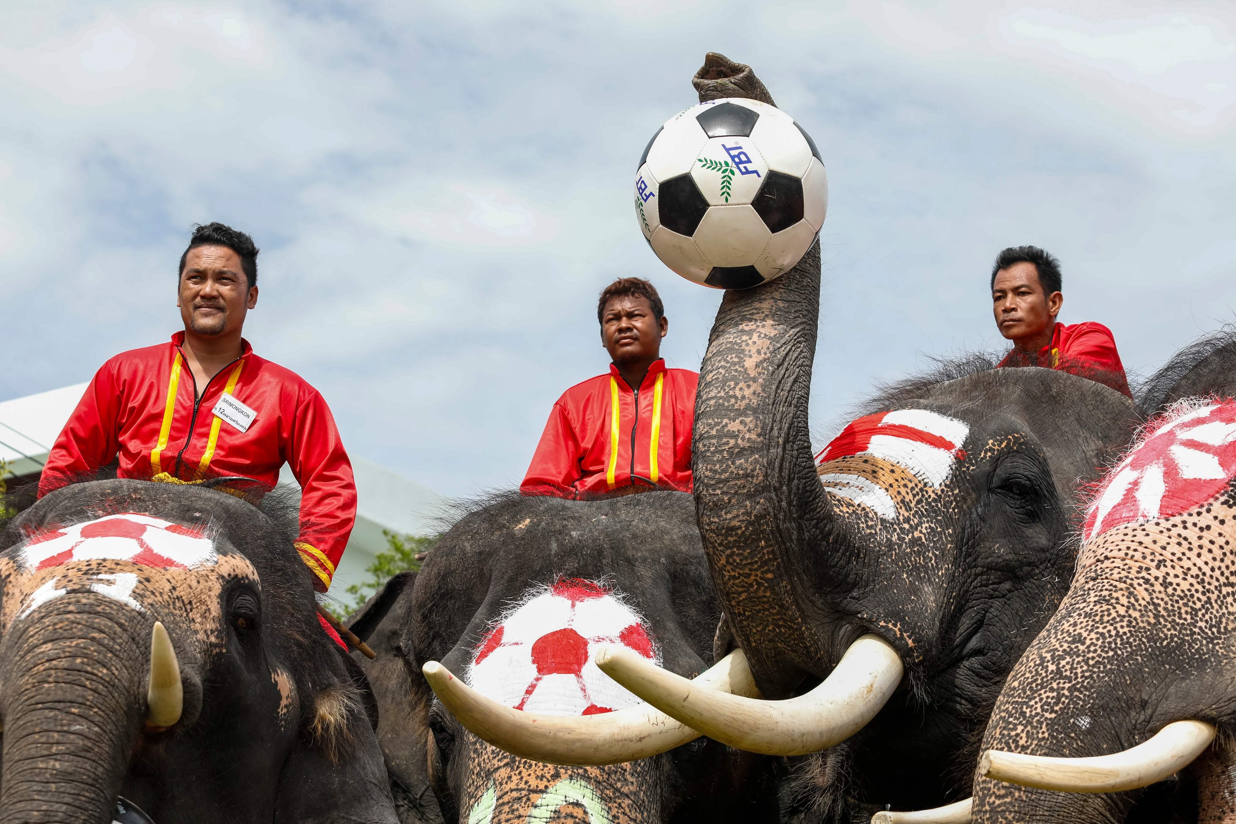 مبارة الأفيال (3)