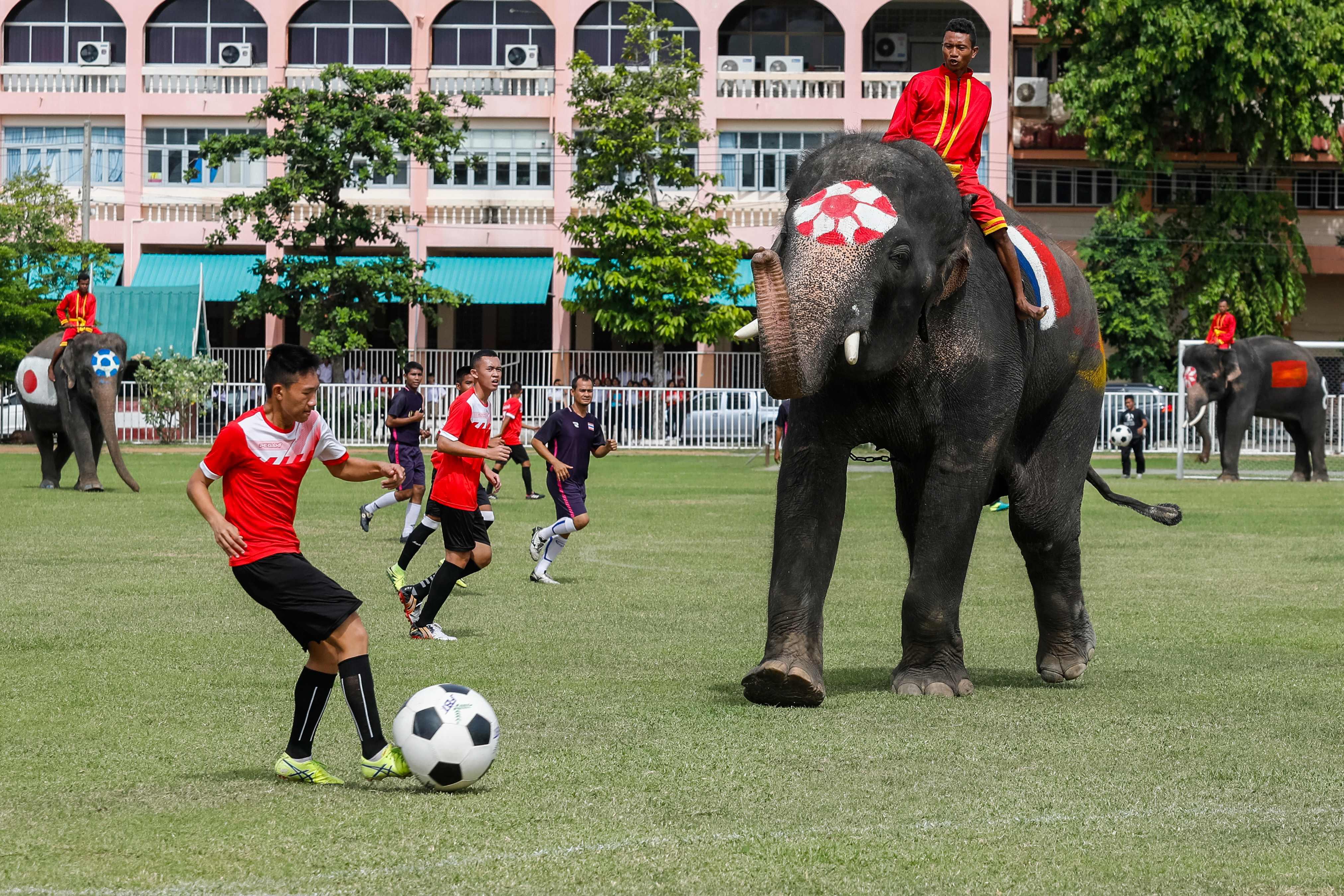 مبارة الأفيال (2)