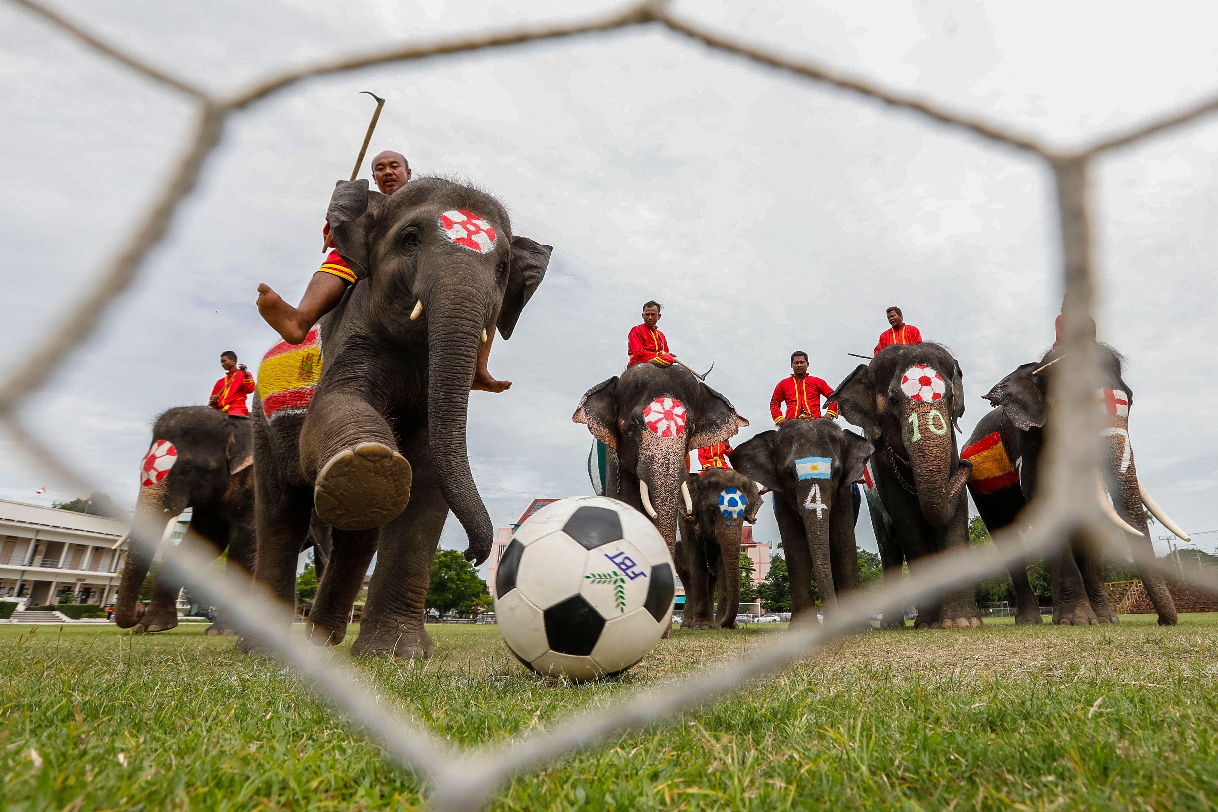 مبارة الأفيال (1)