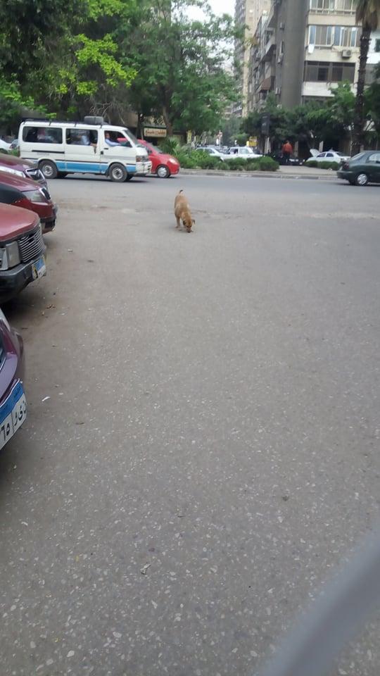 الكلاب الضالة فى الزيتون  (2)