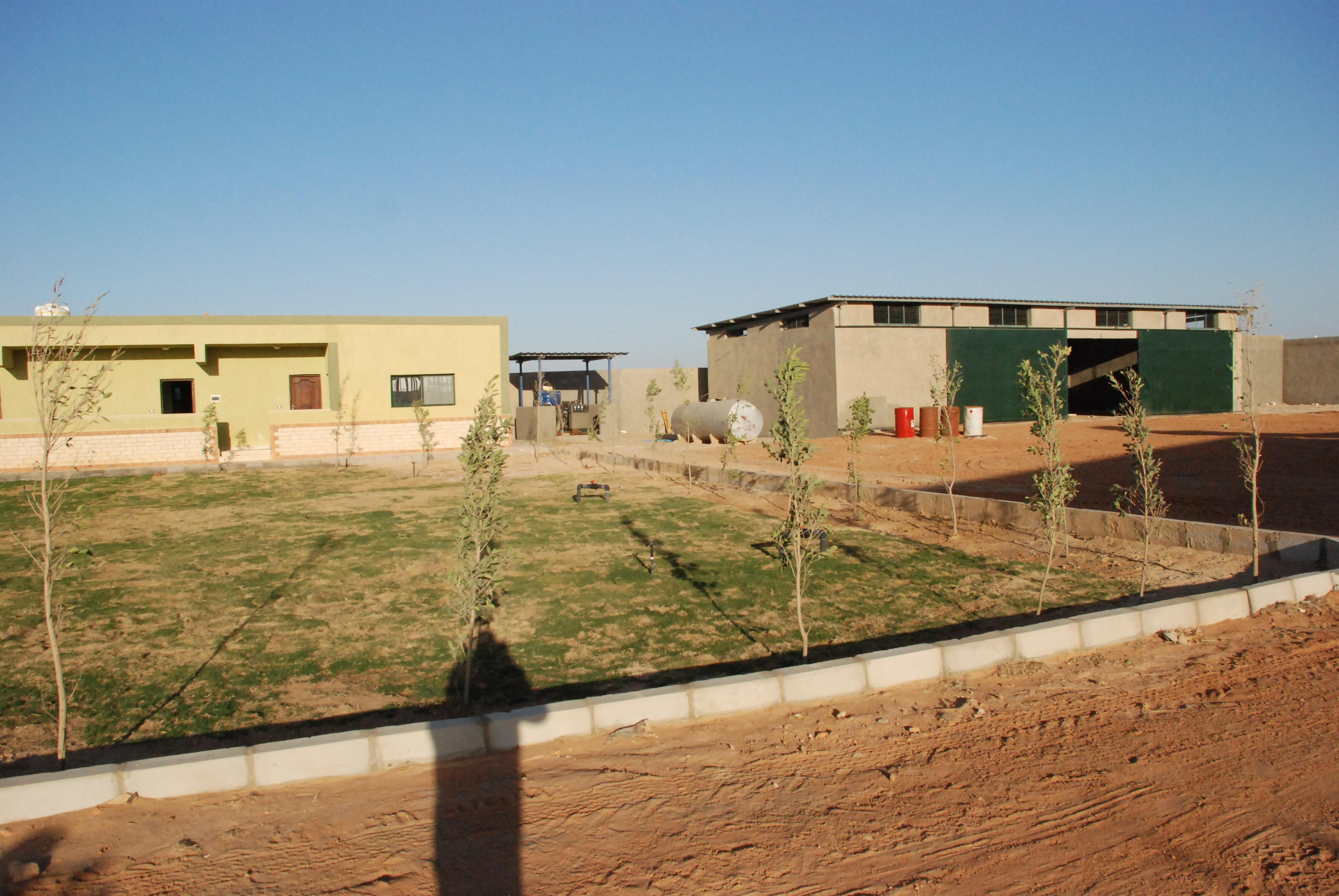 المرحلة الأولى من مشروع الـ20 ألف فدان بغرب غرب المنيا  (8)