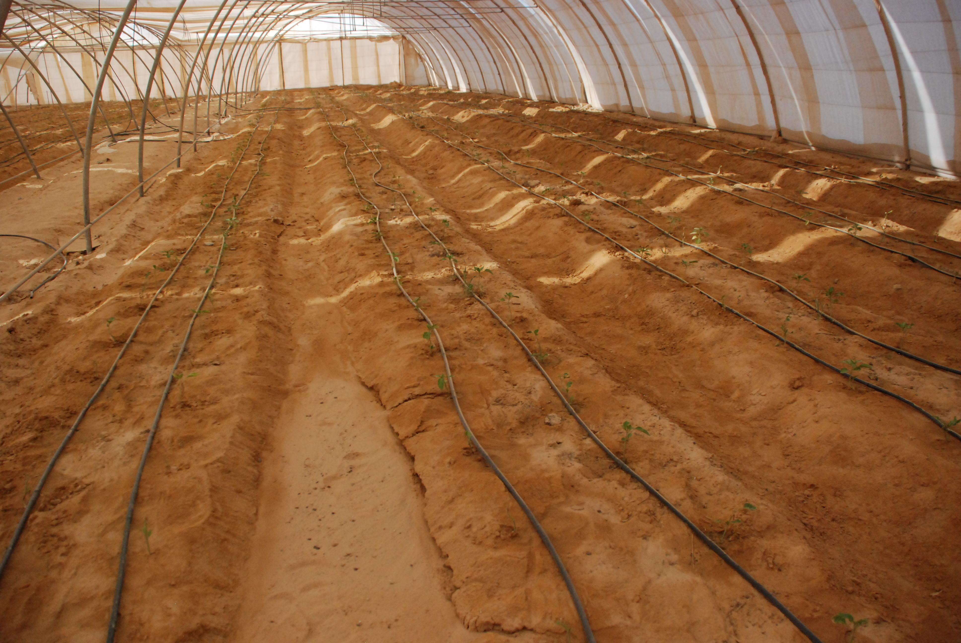 المرحلة الأولى من مشروع الـ20 ألف فدان بغرب غرب المنيا  (10)