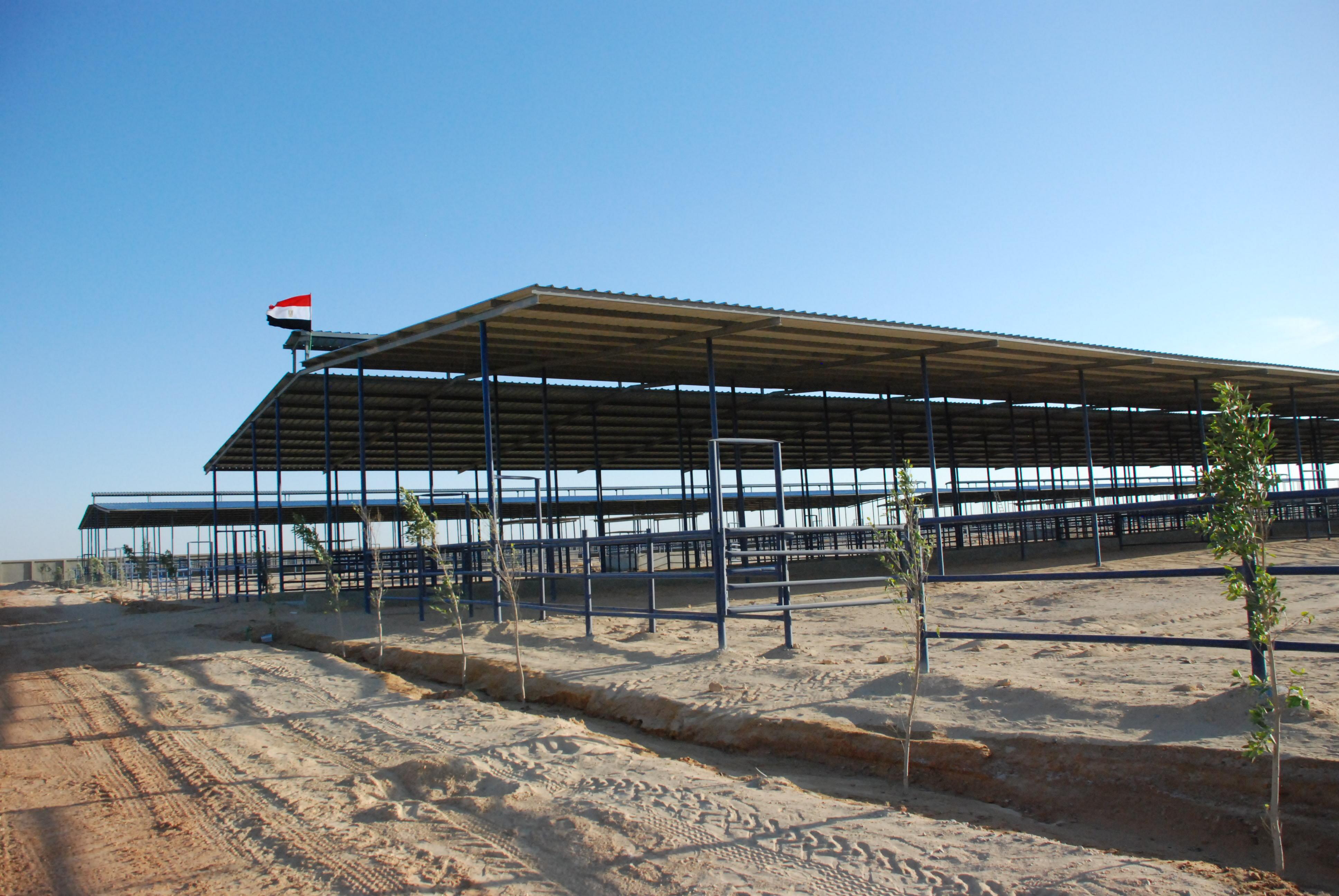 المرحلة الأولى من مشروع الـ20 ألف فدان بغرب غرب المنيا  (6)