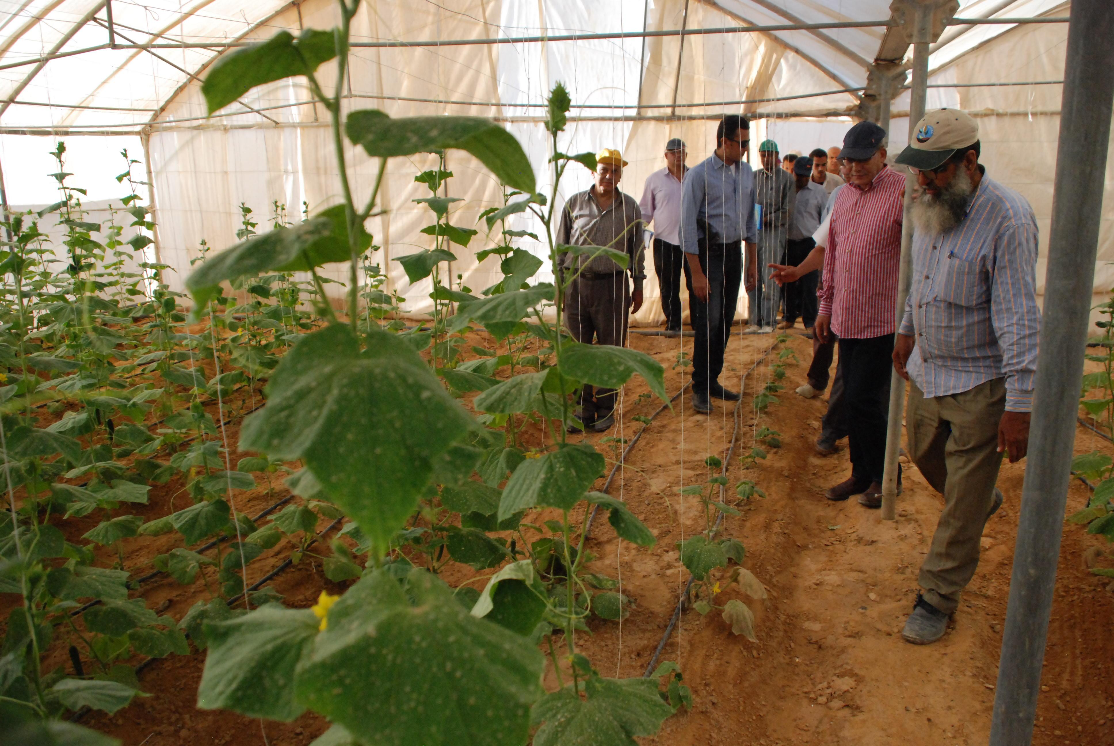 المرحلة الأولى من مشروع الـ20 ألف فدان بغرب غرب المنيا  (14)