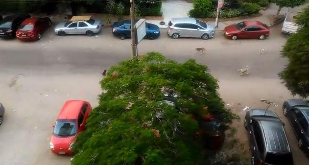 انتشار الكلاب الضالة بشارع ألماظة