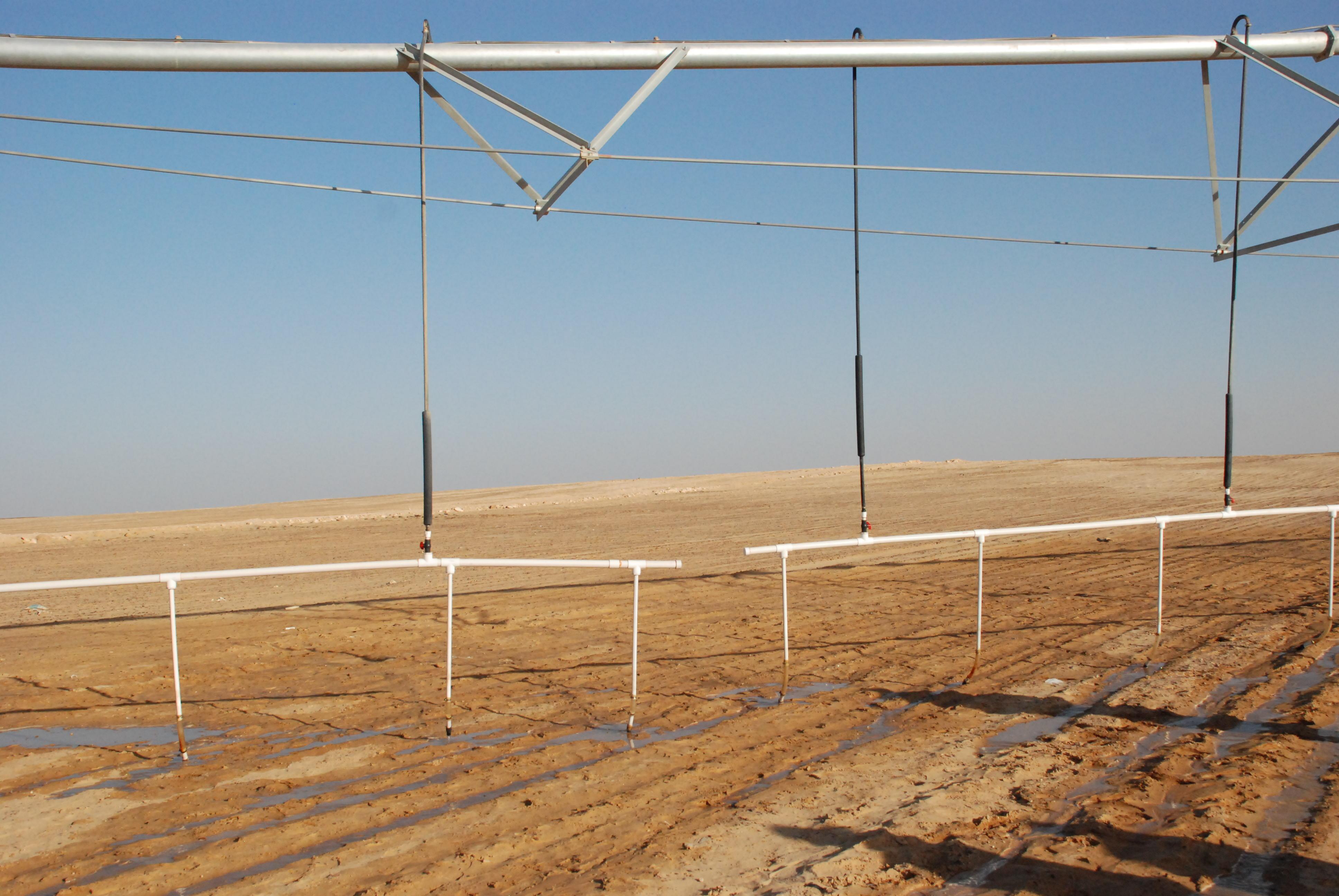 المرحلة الأولى من مشروع الـ20 ألف فدان بغرب غرب المنيا  (4)