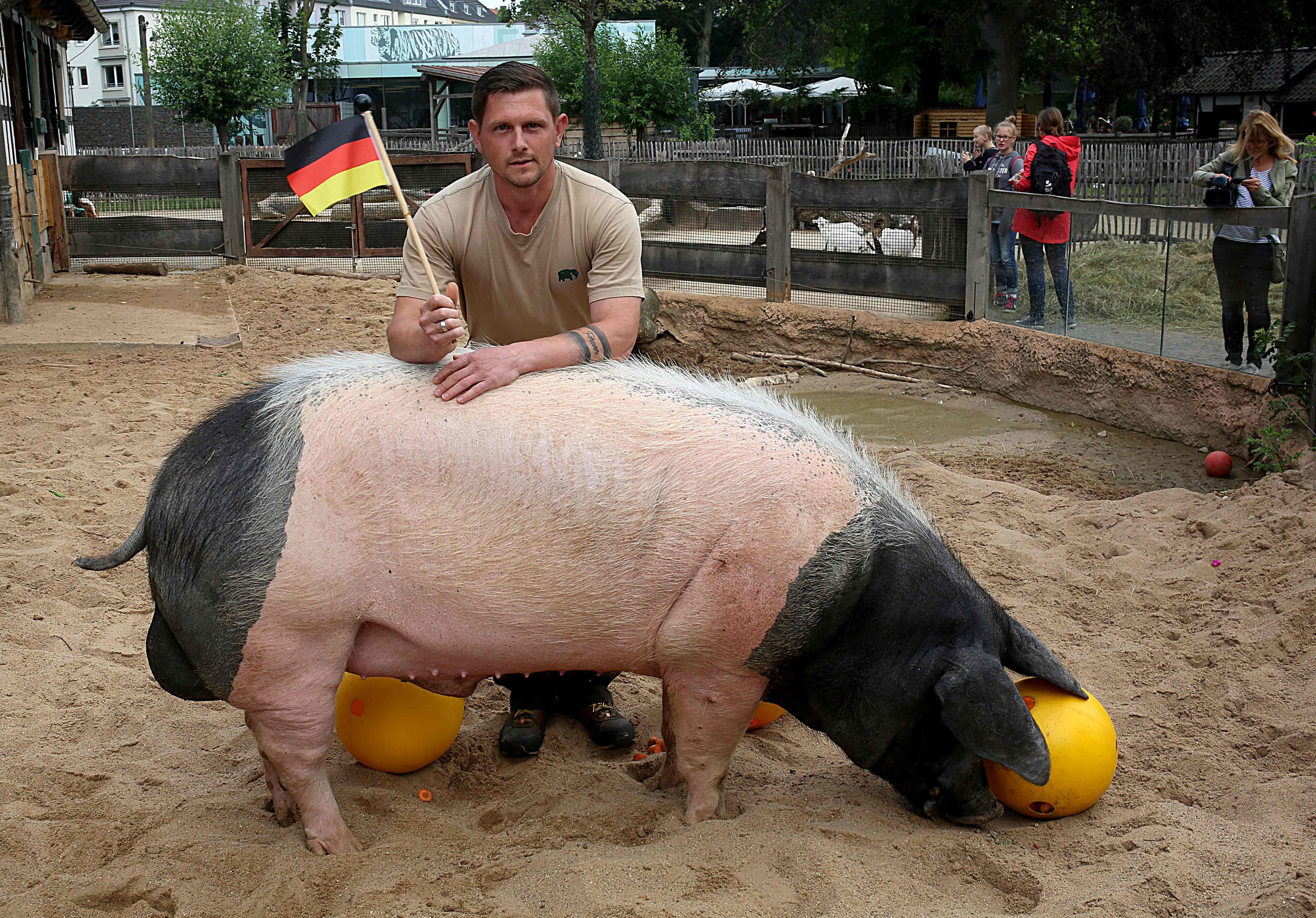 الخنزير هارى يحمل بشرى سارة لمشجعى منتخب ألمانيا