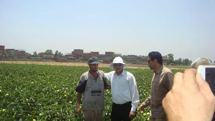 الدكتور عباس الشناوى رئيس قطاع الخدمات الزراعية