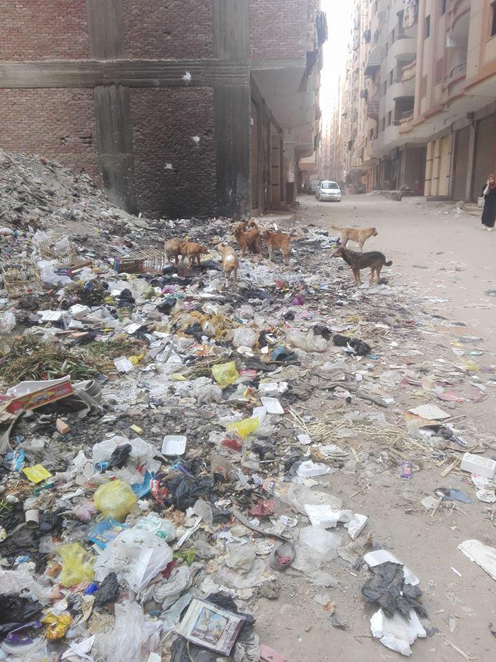 القمامة والكلاب فى الشارع