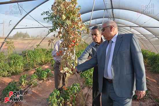 المحافظ يتفقد احد المشروعات الزراعية