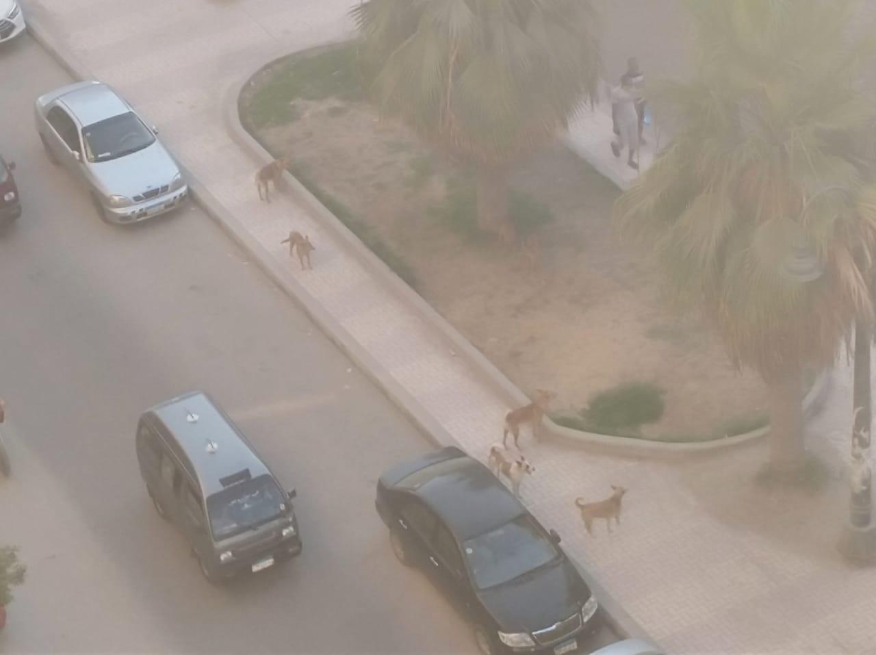 الكلاب الضالة غرب الإسكندرية  (1)