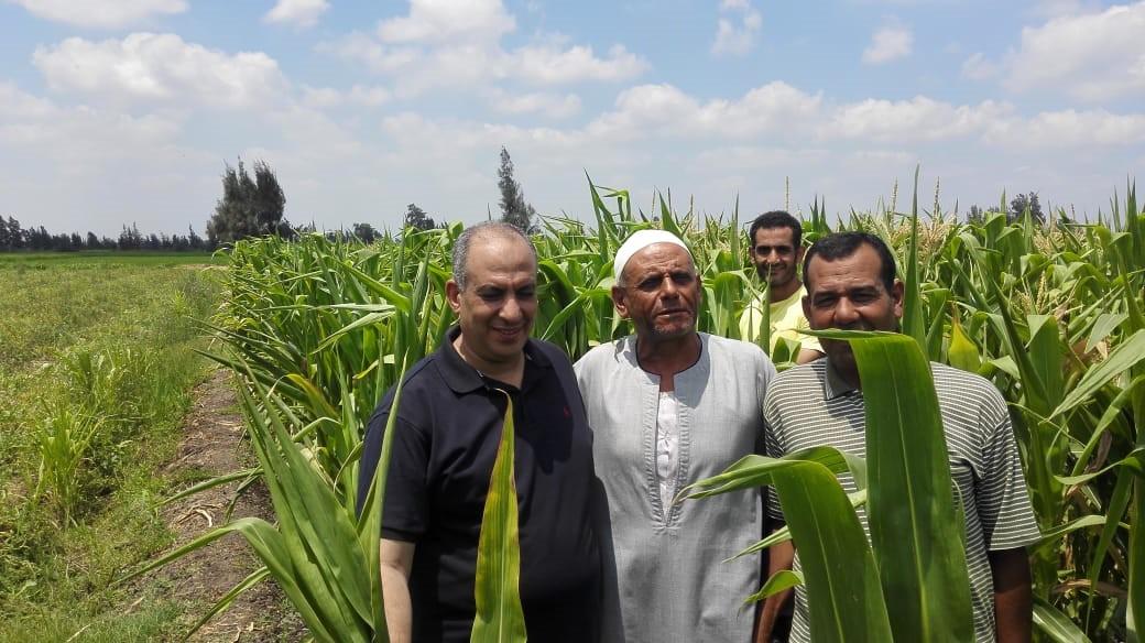 فلاحين داخل محصول الذرة