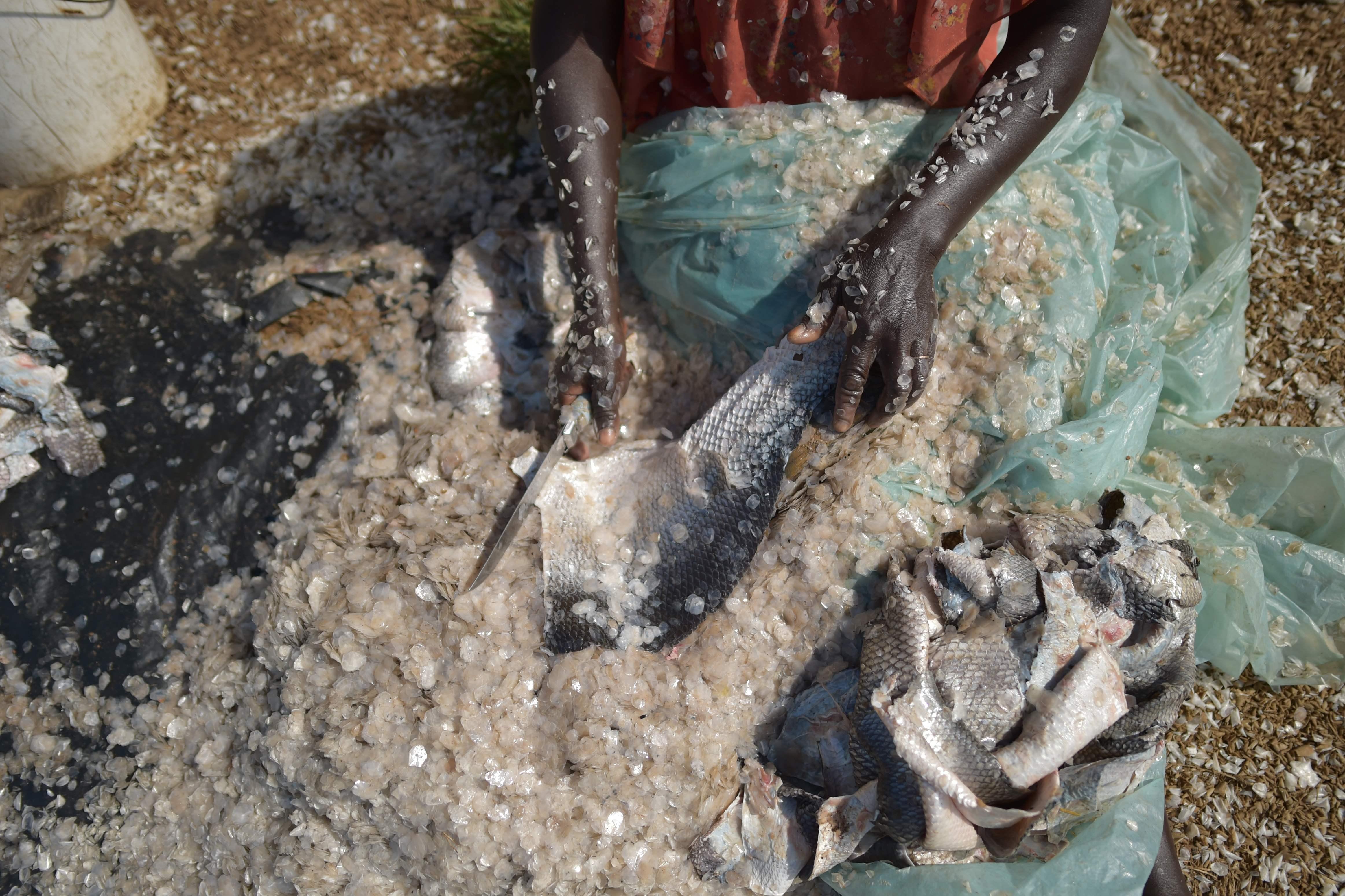 تنظيف جلد السمك من القشر