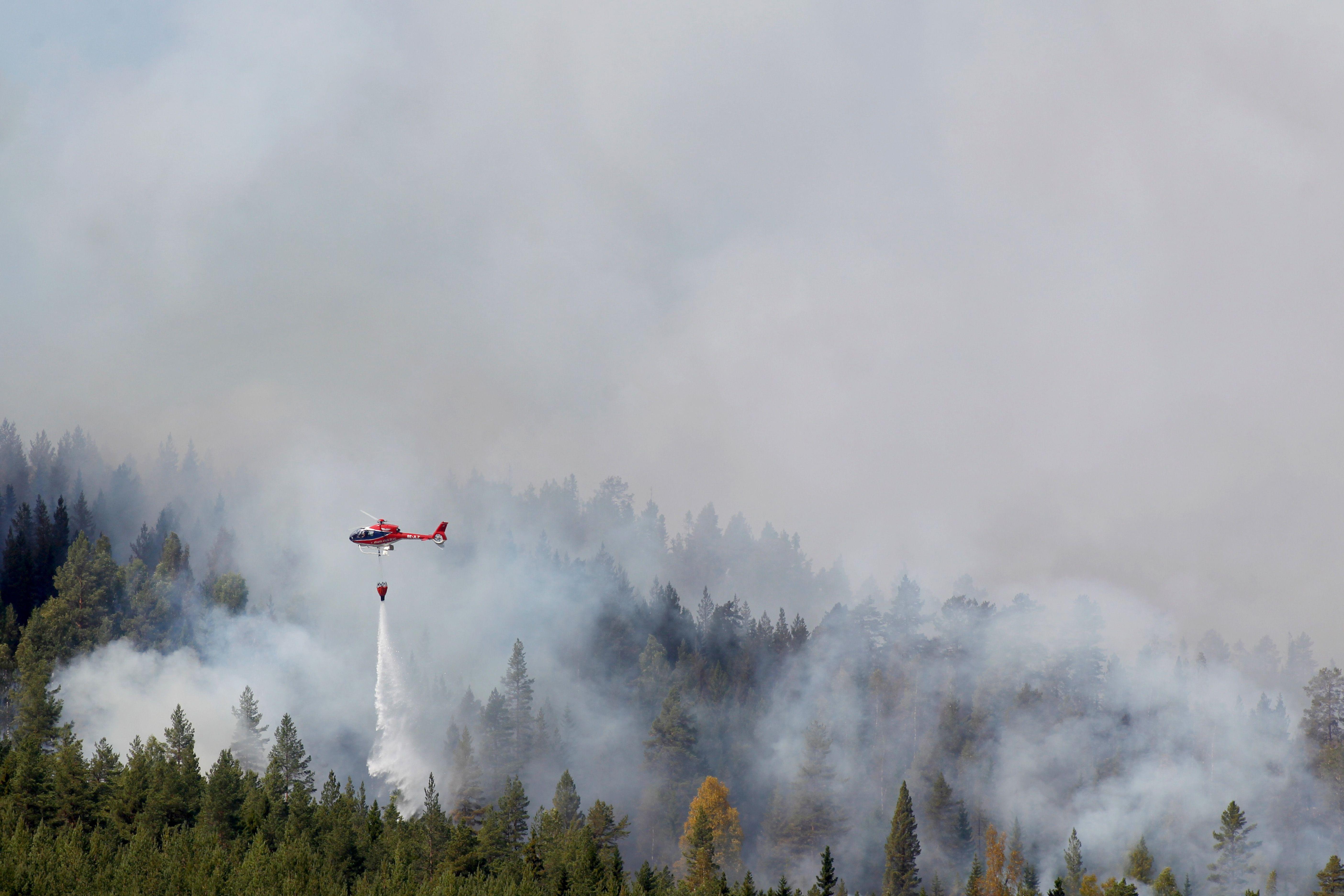 الدخان يتصاعد من الأشجار