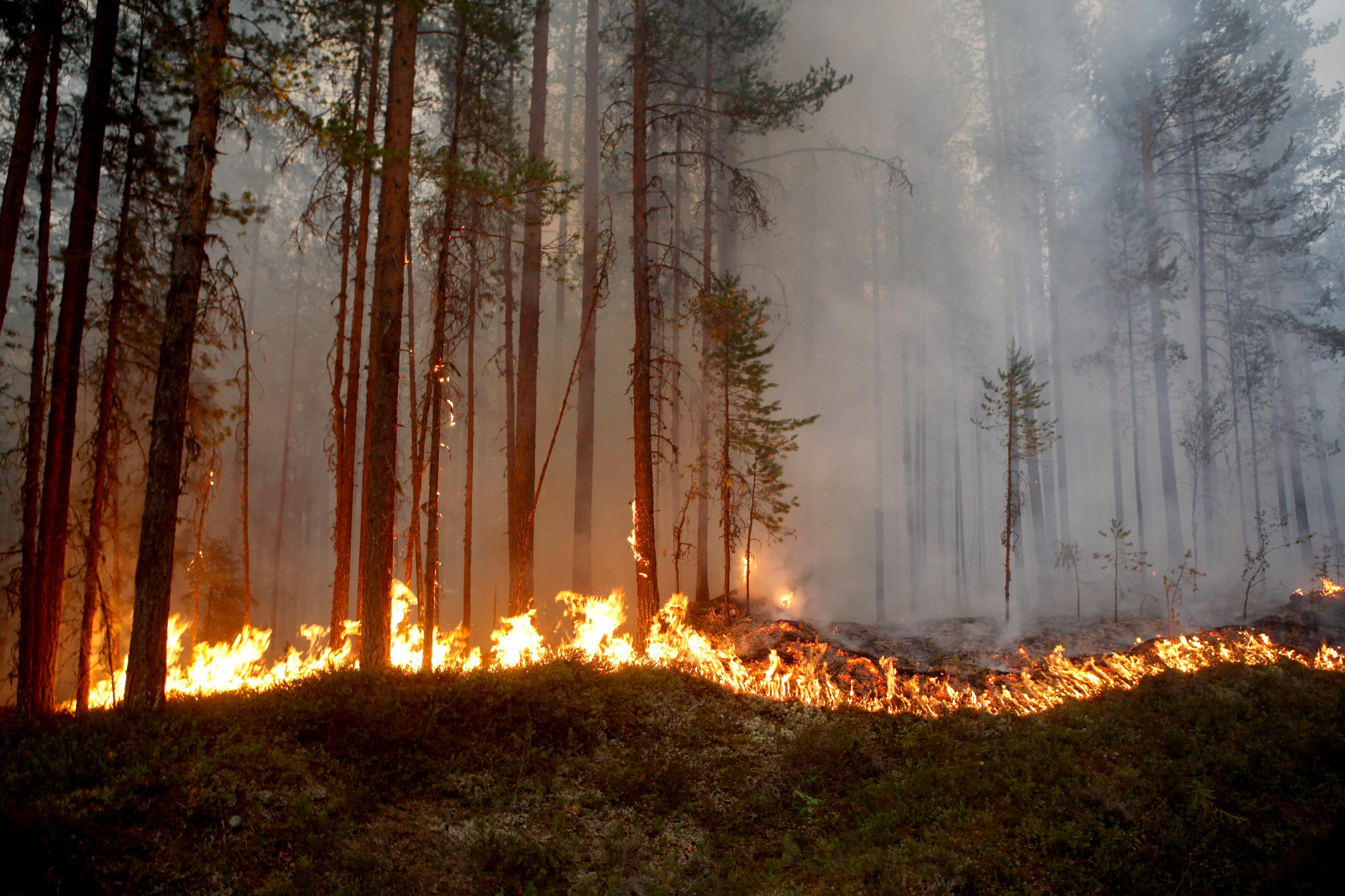 النيران تدمر الأشجار