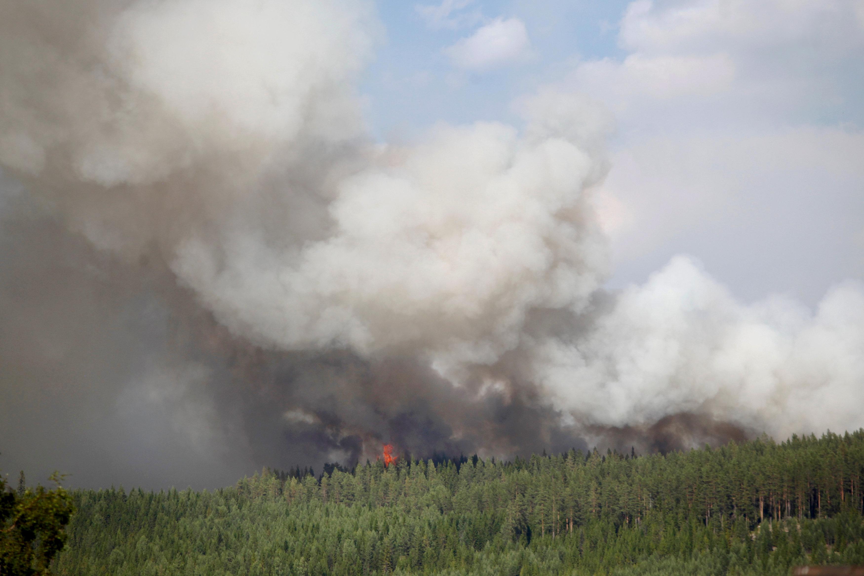 النيران تحرق الغابات
