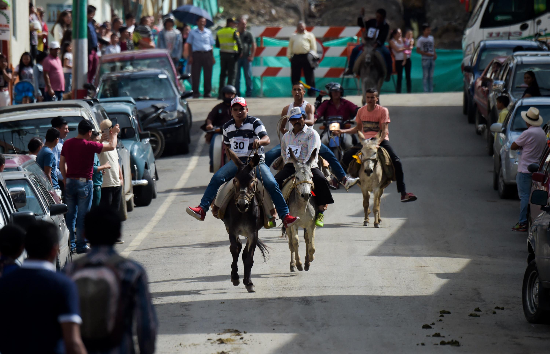 مسابقة الحمير في كولومبيا