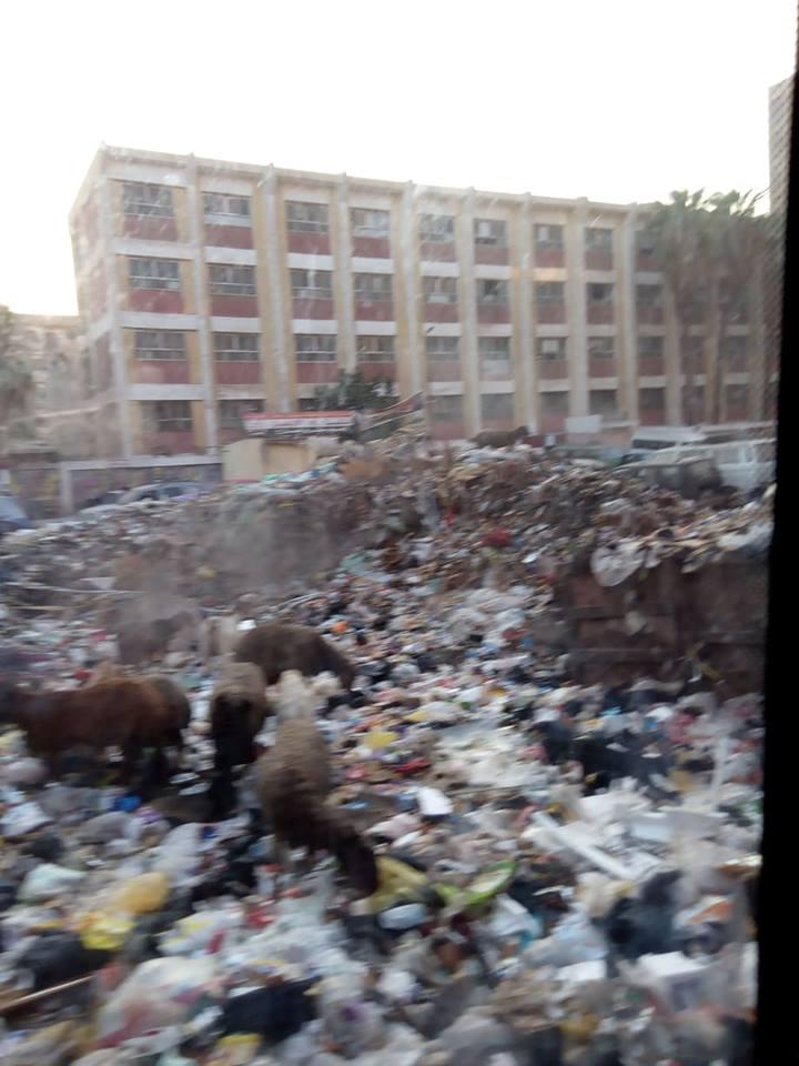 انتشار القمامة والحيوانات