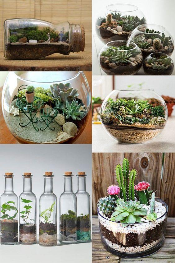 زجاجات للزرع