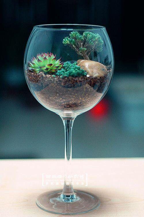 كأس للزرع