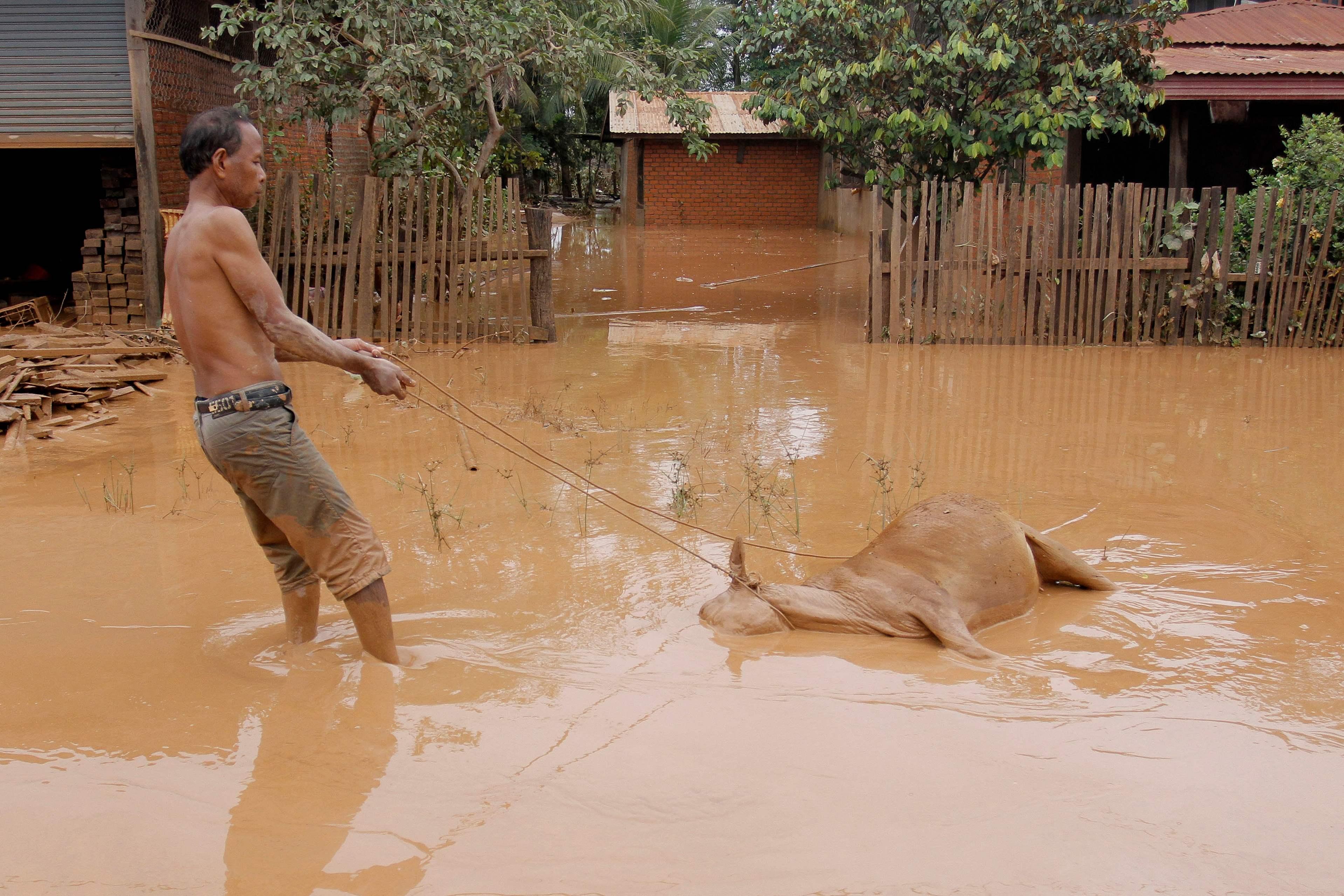 غرق الحيوانات