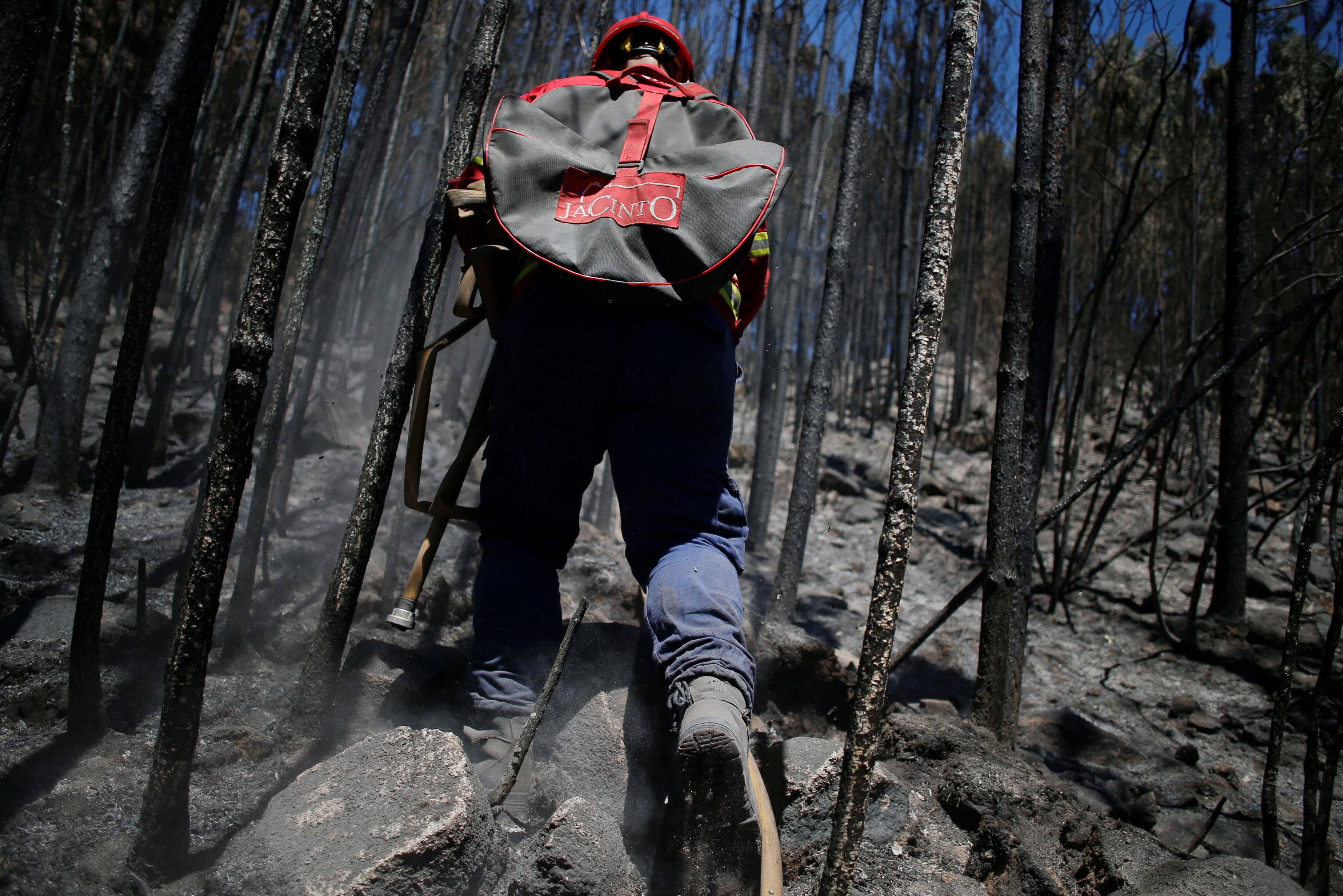 أحد رجال الإطفاء أثناء السيطرة على حرائق الغابات