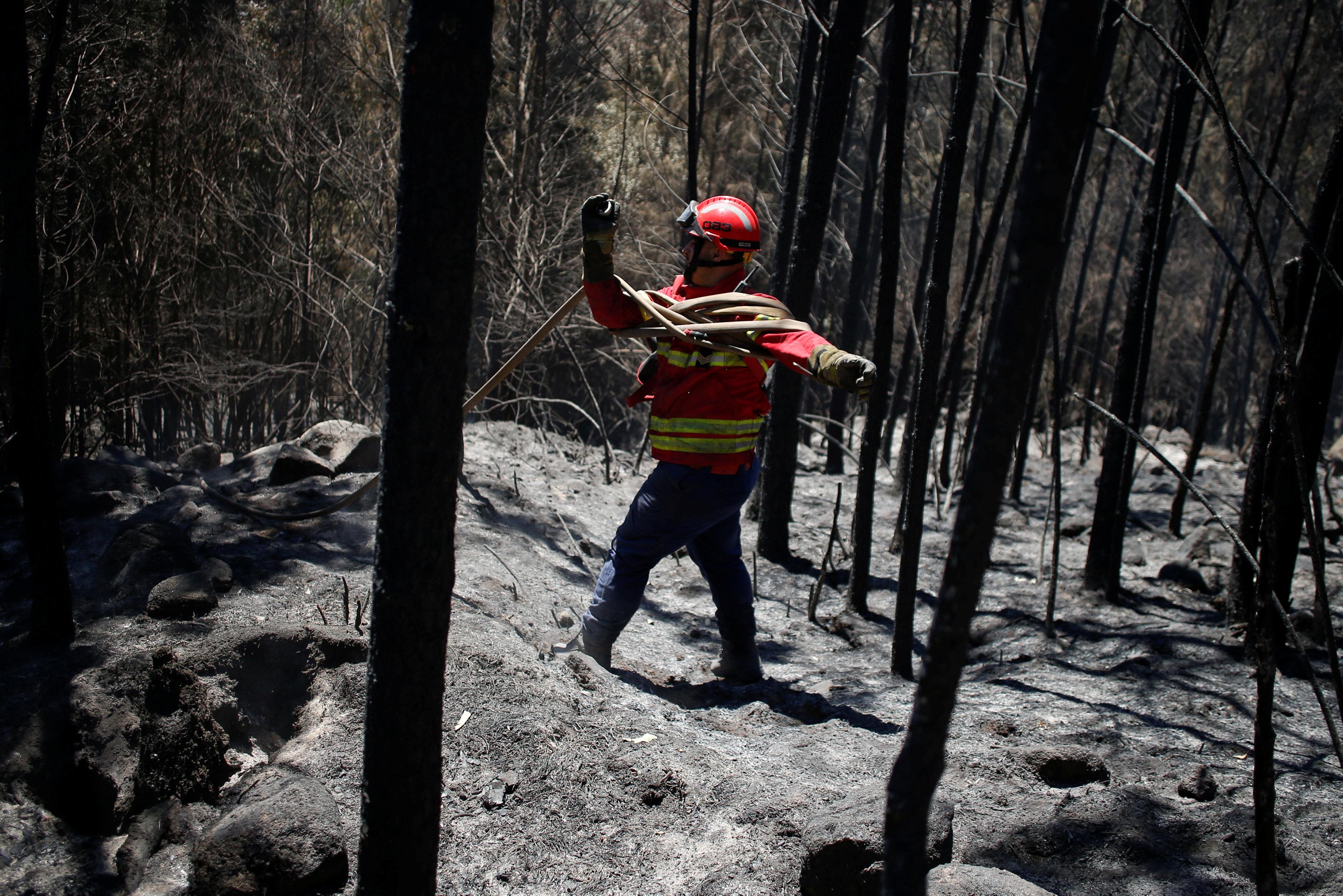 رجال الإطفاء يواصلون إطفاء حريق الغابات