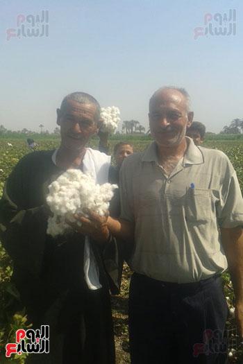 بدء-موسم-حصاد-القطن-(1)
