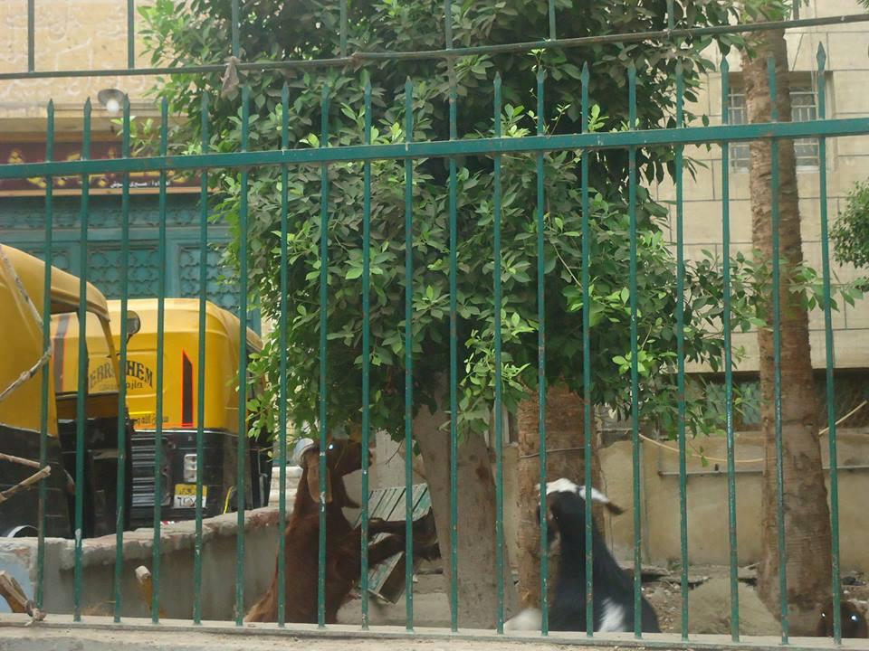 حديقة مسجد النجدى بأبو كبير بالشرقية (3)
