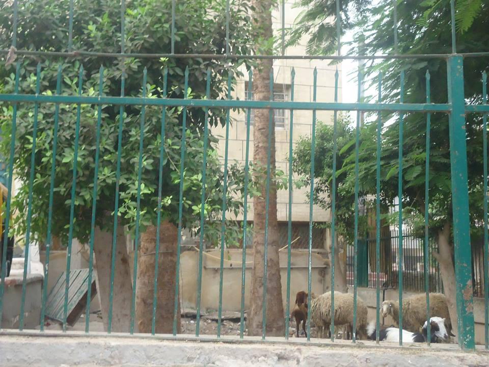 حديقة مسجد النجدى بأبو كبير بالشرقية (4)
