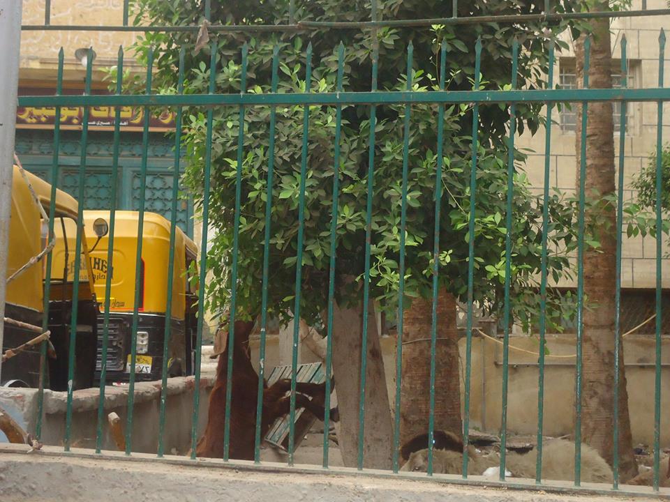 حديقة مسجد النجدى بأبو كبير بالشرقية (1)