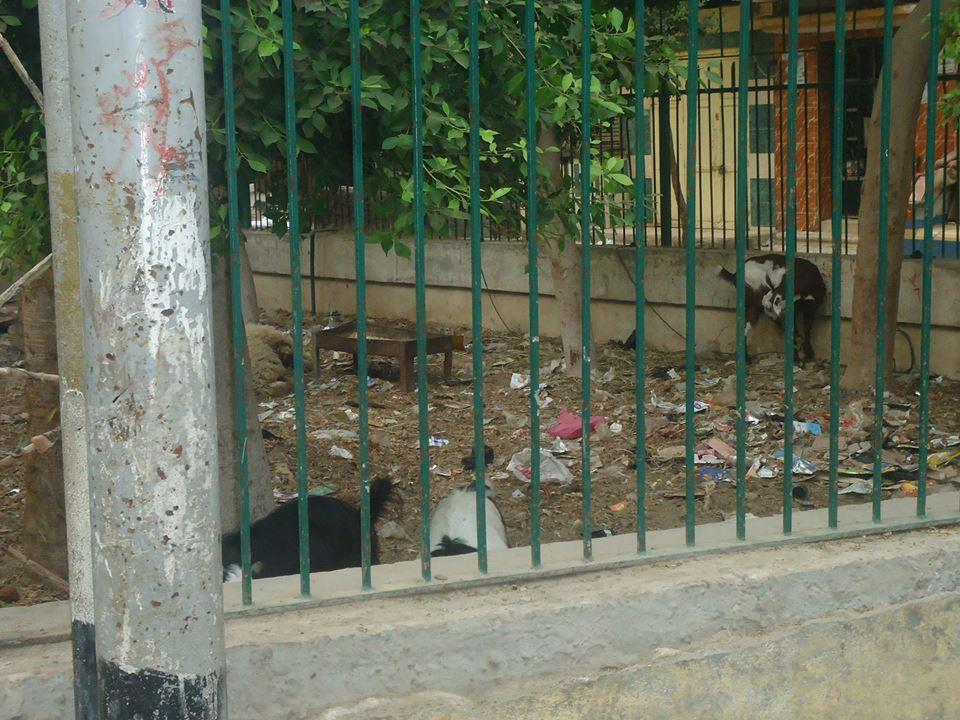 حديقة مسجد النجدى بأبو كبير بالشرقية (5)