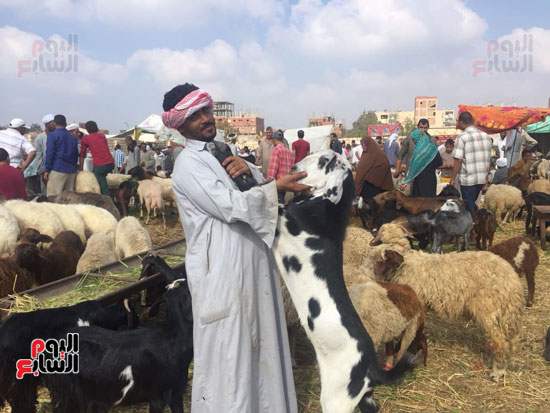 خروف العيد  (3)