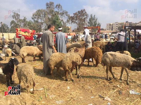 خروف العيد  (10)