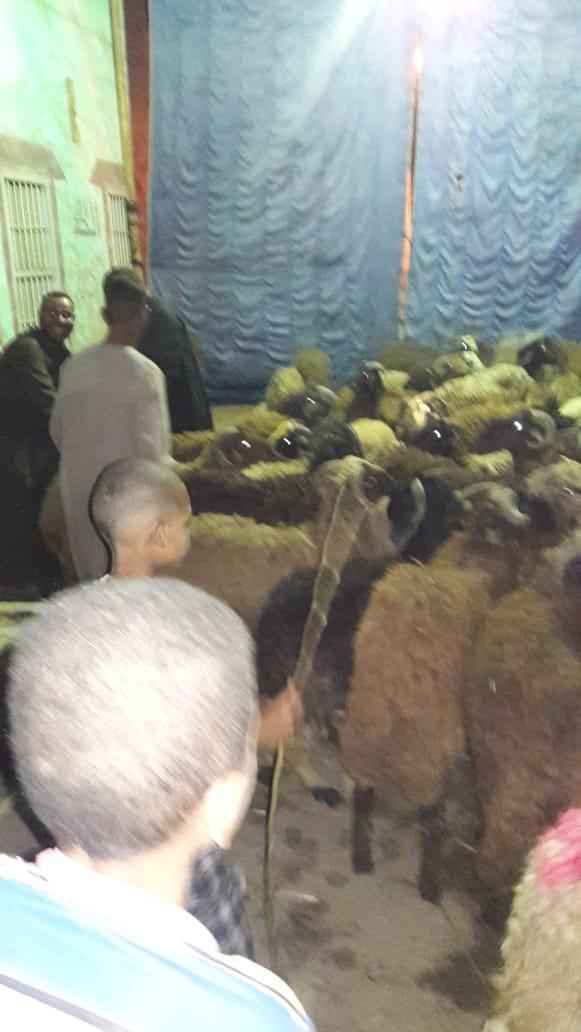 الأوقاف تعلن وجود صكوك أضحية بـ1500 جنيهاً بالمساجد الكبرى ومقر المديرية
