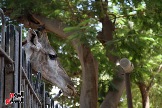 صور حديقة الحيوان و الفسطاط (29)