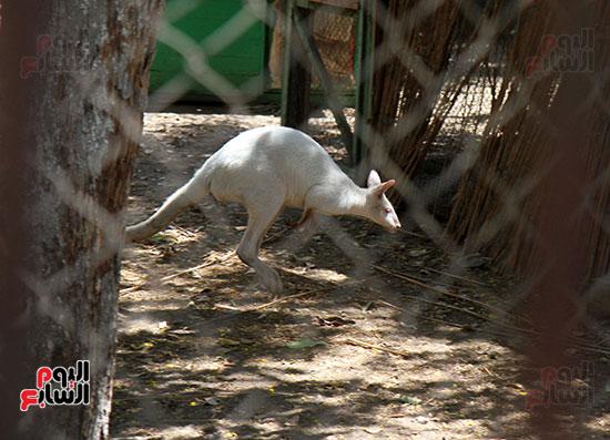 صور حديقة الحيوان و الفسطاط (38)