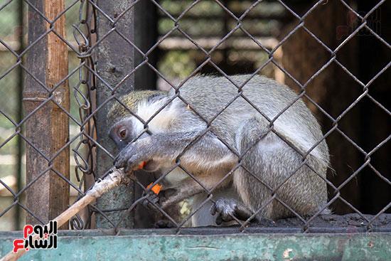 صور حديقة الحيوان و الفسطاط (36)