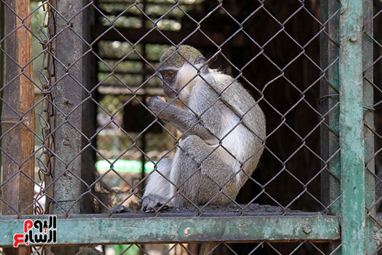 صور حديقة الحيوان و الفسطاط (35)